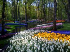 Netherlands at the world famous Keukenhof Gardens. Situated between Amsterdam and The Hague in the Bulb region, the Keukenhof (roughly pronounced Koo-ken-hoff) boasts more than 7 million flower bulbs planted by hand. Most Beautiful Gardens, Beautiful World, Beautiful Flowers, Beautiful Places, Nassau, Destinations, All Nature, Leiden, Large Flowers
