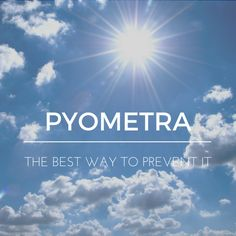 Pyometra : The Best Way To Prevent It