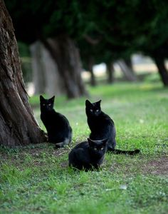 Little black kittens