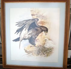 AFRICAN ARTEAGLE OR HAWK WITH CHICK QUALITY PRINT FRAMED