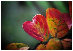 autumn hearts