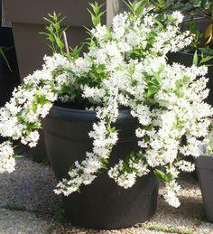 Balcons & Terrasses : quelles plantes pour quelle exposition ? L'ombre... Quelques exemples de fleurs, d'arbustes, d'annuelles, ... pour l'ombre... des idées à piocher