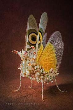 Fotografías macroscópicas de insectos