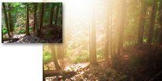 Photoshop: Morning Glow photo effect