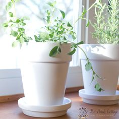 The Birch Cottage shares how to paint terra cotta pots with white spray paint. You can use any color to spray paint terra cotta!