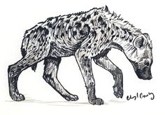 Young Spotted Hyena by silvercrossfox