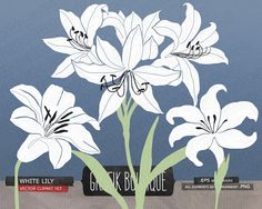 White lily gladiolus amaryllis flower digital vect