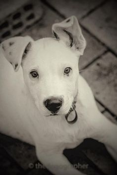 Find your new best friend at PetRescue - dogs, cats and many more pets available for adoption today! Dog Mixes, Save Life, Bunker, Rescue Dogs, Feathers, Dogs And Puppies, Pitbulls, Waiting, Best Friends