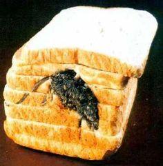 mouse bread?    Õ.Õ