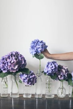 These hydrangeas add so much life to a room! I'm especially in love with the different vases and jars they're in. So whimsical!