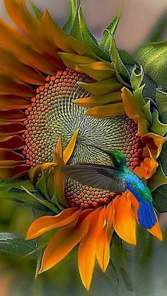 Hummingbird ... bird for biashedo™ ~ My Universe Is Friendly... Inside and Out... And So Is Yours... Grace... Love... Prosperity... Always sending forth light and love... :o) Healthy Lives Campaign (HLC) ... windinc.org Photo courtesy of World of Creativity ...