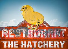 Vintage Neon Sign- The Hatchery Restaurant, Petaluma, California