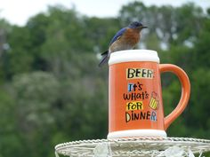 """Beer is what's for dinner"", orange, orange and white, large beer mug, funny beer mug, funny animal photos, bird perch, ""what's for dinner?"" jeanasina, backyard bird photo, jeanasina, ""Beer it's what's for dinner"", mug, ""Beer, it's what's for dinner"" sign,"