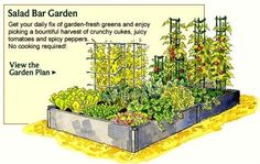 Poor results is often due to poor plans. See tips for better plans, designs, layout of vegetable gardens to guarantee yields of healthy home grown produce.