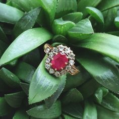 We're adoring this Victorian beauty while surrounded by sunshine and lush plants. This AGL certified Burmese Ruby is surrounded by a gorgeous rose cut diamond halo. It would make a stunning gemstone engagement ring. abrandtandson.com