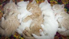 Tiere kennen den gesunden Schlaf! - Bilder, Videos - lol.de - Tiere - Total verrückt