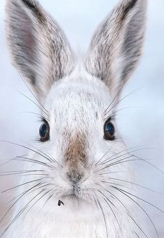 Beautiful whiskers on a snowy bunny