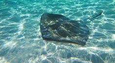 Stingray Sandbar in Grand Cayman | Flickr - Photo Sharing!
