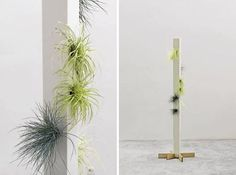 "this is cool...air plants ""potted"" in a vertical ""planter""....not sure how you would water it exactly but LOVE the idea"