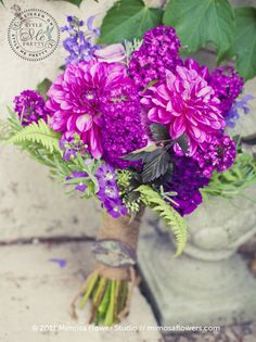 Dahlias, Stock, Flatfern