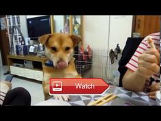 😸 Funny Cat and Dog want food from Owner Best Video of Pet 🐶 Amazing attack k animals attack african jungle animals attack animals attack…