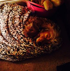 #snuggle pup
