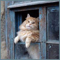 Beautiful Cat in window