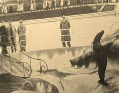 Zeehondenverblijf Blijdorp