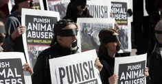 In Victory for Animals and Their Defenders, Judge Strikes Down Idaho 'Ag-Gag' Law | Common Dreams | Breaking News & Views for the Progressive Community
