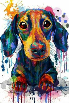 Dachshund I love my little boy Benjamin, he fills my life with happiness, and sometimes comedic relief. I love you Benji boy 3 Dachshund Art, Dachshund Puppies, Weenie Dogs, Daschund, Doggies, Dachshund Drawing, Funny Puppies, Tableau Pop Art, Animal Paintings