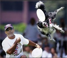 A mixed breed dog going for the disc.