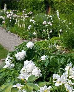 The white border in June at the Beatrix Farrand Garden at Bellefield