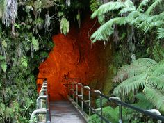 Thurston Lava Tube on Hawaii Island
