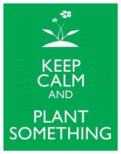 Keep calm and plant! What's growing in your garden? Diy Garden, Dream Garden, Garden Projects, Garden Plants, Pot Plants, Garden Club, Plants Indoor, Garden Gate, Edible Garden
