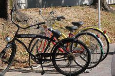 Bicycles in Campus-Nagoya University