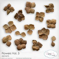 Flowers Vol. 3 by Lara's Digi World | Digital Scrapbooking Element Packs Elements Of Art, Site Design, Word Art, Art Images, Digital Scrapbooking, Black Friday, Digital Art, Packing, Place Card Holders
