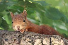 Eichhörnchen Notruf e.V. - Fütterung