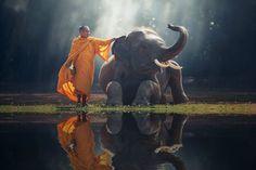 Buddhist Meditation :Metta and Mindfulness Meditation Buddhist Meditation, Meditation Art, Buddhist Monk, Buddhist Art, Elephant Canvas, Elephant Wall Art, Elephant Pics, Shamanic Music, Buddha Wall Art