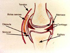 El dolor en los riñones y la espátula derecha