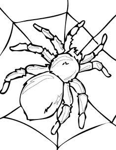 1000 images about herfst spinnen kleurplaten on