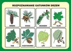 Przyroda - Zestaw plansz w wersji drukowanej + program CD Poland Map, New Class, Interactive Notebooks, Toddler Activities, Montessori, Homeschool, Children, Origami, Survival