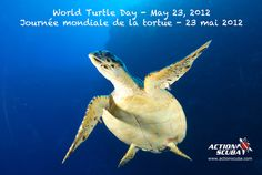 May 23 is World Turtle Day