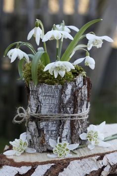 Hübsche Frühblüher-Deko Despite snow, decorative snowdrops, winter aconites and other early bloomers open their flowers. But why are these plants. Arte Floral, Deco Floral, Blooming Flowers, Spring Flowers, Garden Art, Garden Design, Window Box Plants, Window Boxes, Pot Jardin