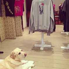Our model is in the shop today! Meet Alfie the dog, he is the inspiration behind our bestselling dog print! www.emmanissim.com