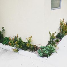 Love this narrow edge planting #break_urban #partypatio #landscape #losangeles | Narrow plant bed patio garden corner