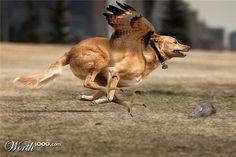 Fly doggy, fly!