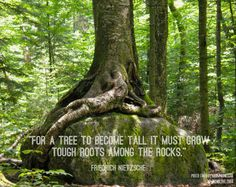 Tree quote: tough roots, rocks