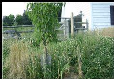 Planting Fruit Tree Guilds | Peak Prosperity
