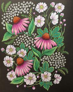 #野の花の塗り絵ブック #マリアトロッレ #mariatrolle #油性色鉛筆#ホルベイン色鉛筆 #大人の塗り絵 #コロリアージュ #coloriage #coloringbook #sanマリアトロッレ