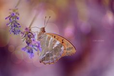 The magical world of butterflies by Pier Luigi Saddi on 500px